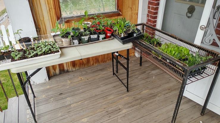 Grow A Row program flourishes