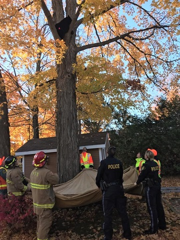 Joint effort relocates bear from east end Pembroke