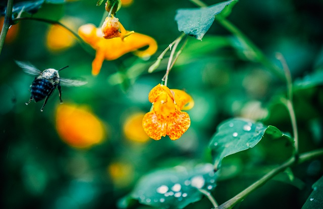 Gardening Club news