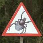 Tick_warning_sign-wikimedia-maria-barisova
