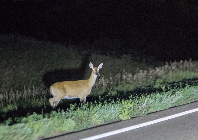 OPP issue driving tips to avoid animal collisions