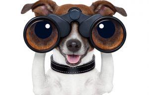 jack-russell-terrier-binoculars-goodfon