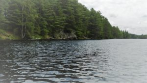 Madawaska-River-shore-near