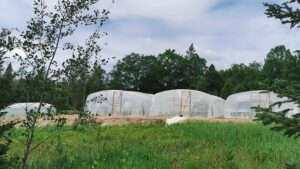 jiang-shan-veg-farm-greenhouses