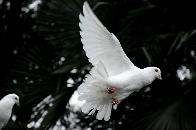 Blessed are the peacemakers – the case for using mediation to resolve disputes