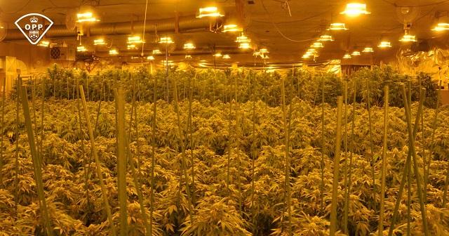 indoor-grow-opp