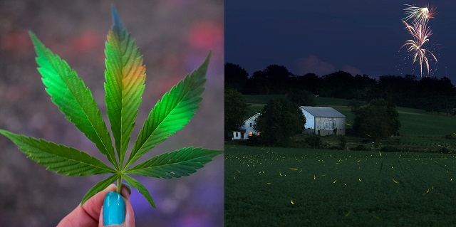 Fireworks and cannabis cultivation spark MV Council into action