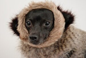 dog-wears-coat-on-spca-fb