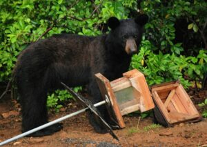 va-bear-with-feeder-bearwise-dot-org