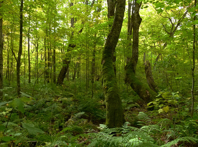 Forests Ontario: plant trees to slow climate change